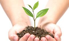 División Agropecuaria